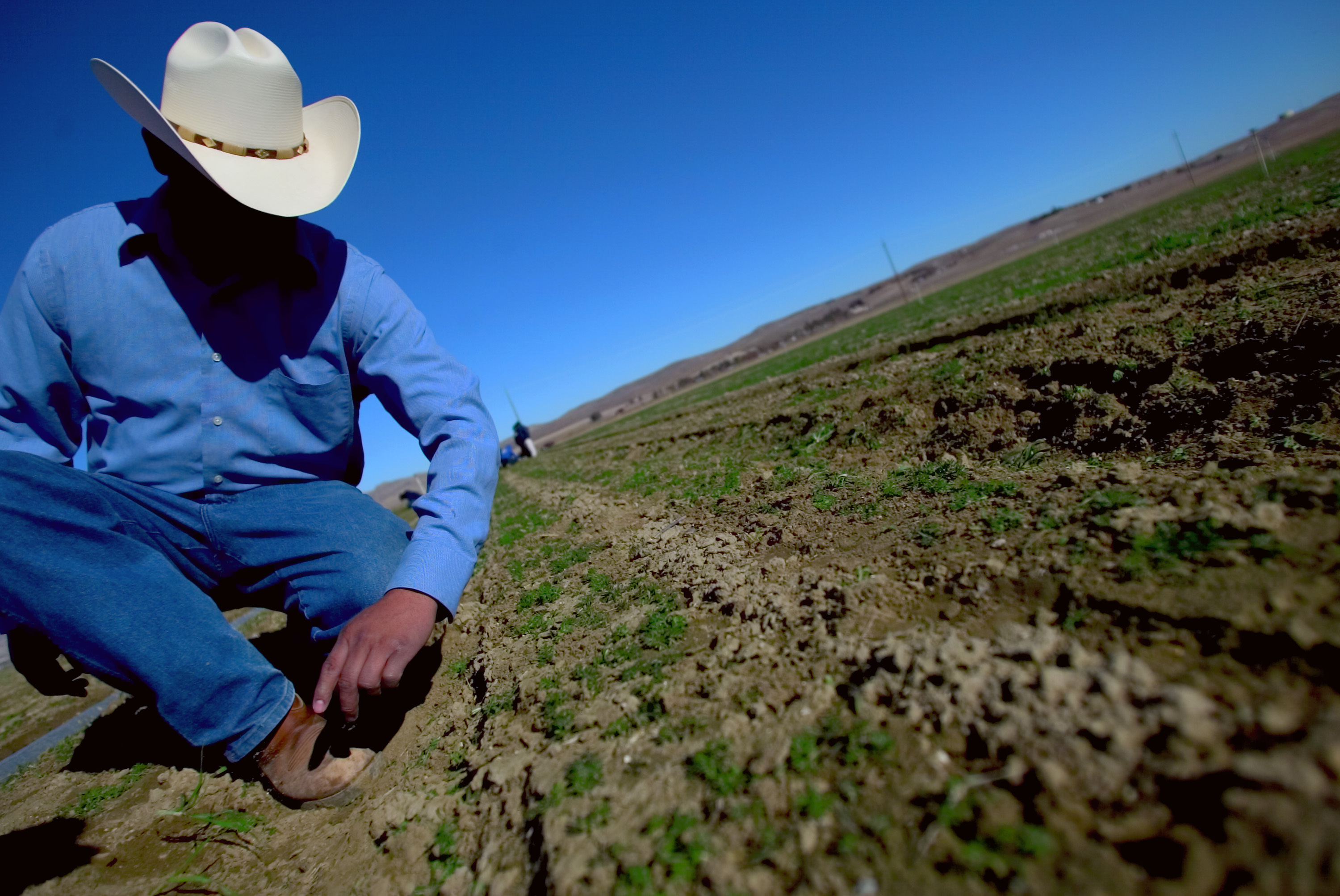 A foreman shows how morning frost affects organic carrots in a field near Coalinga, California. 2007
